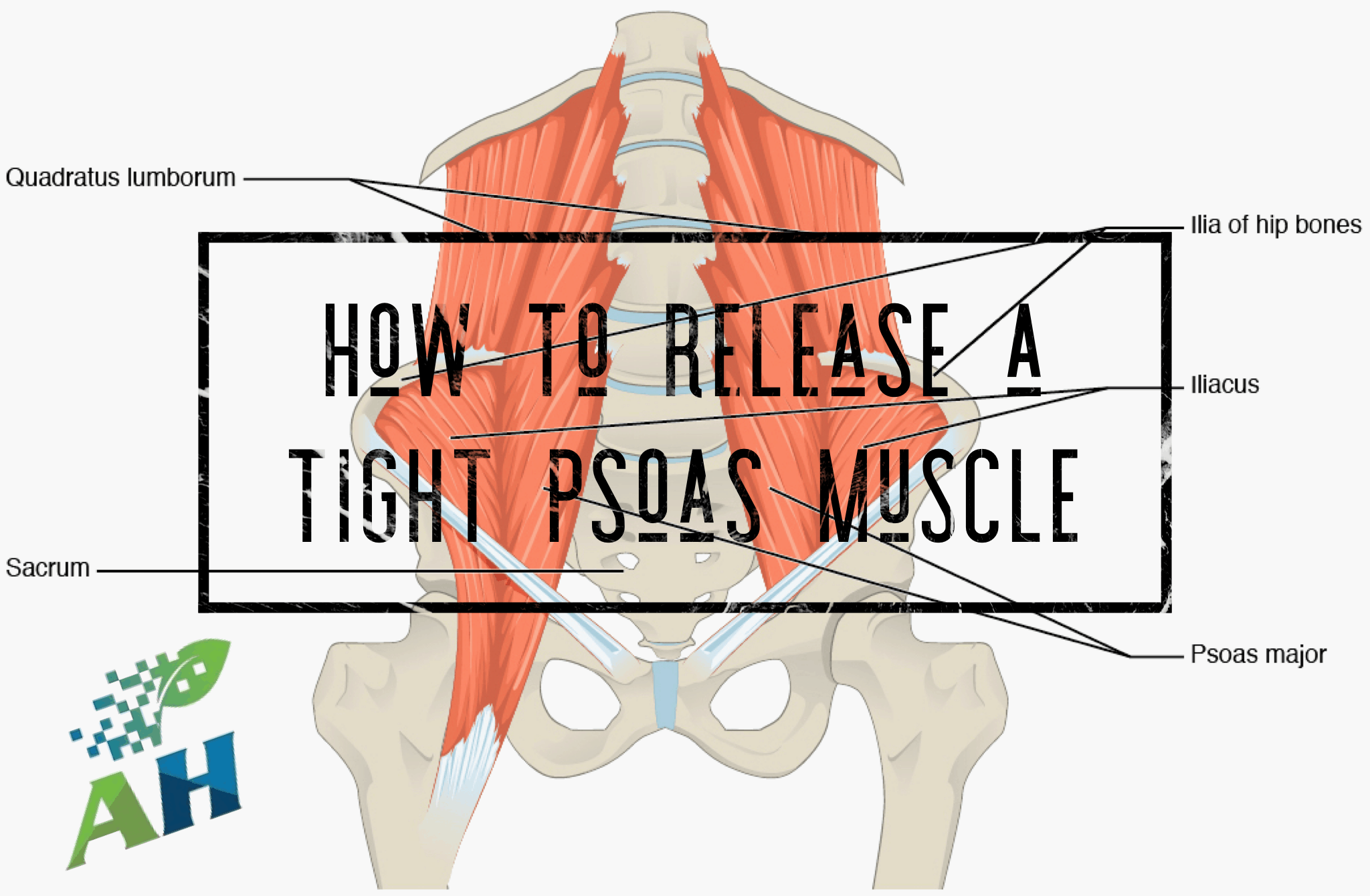 how to release a tight psoas muscle